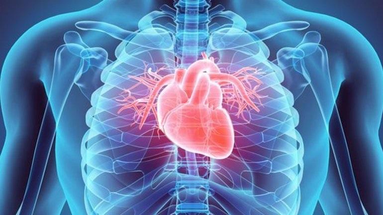 Το μυστικό της υγείας της καρδιάς μπορεί να κρύβεται στο έντερο