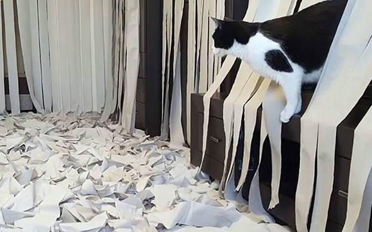 Πώς αντιδρά μια γάτα σε ένα σπίτι γεμάτο με χαρτιά υγείας – Newsbeast