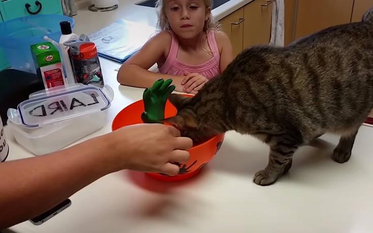 Γάτες που κάνουν τα δικά τους