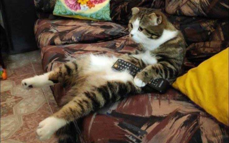 Απλές καθημερινές στιγμές που ζεις αν έχεις γάτα
