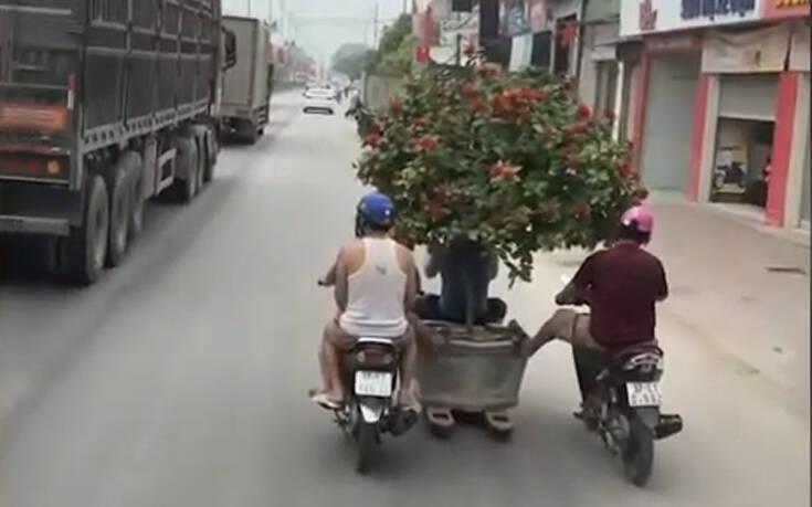Ο πλέον ευρηματικός τρόπος για να μεταφέρεις ένα δέντρο μπονσάι